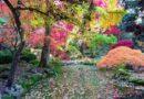 Przelewice Ogród Dendrologiczny i piękny ogród japoński